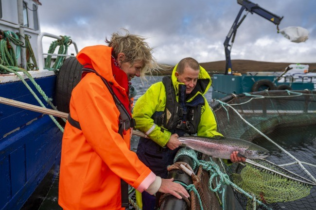 Visitor inspects a farmed salmon at an Orkney farm