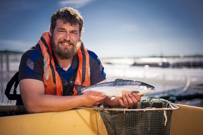 Orcadian salmon farmer checking his stock